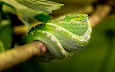 Sơ cấp cứu khi bị rắn cắn